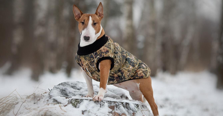 Купить комбинезон для собаки в СПб от производителя